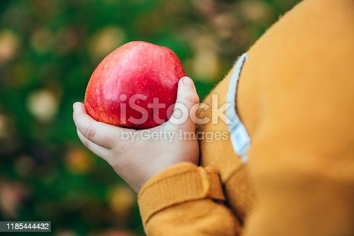 865889676 istock photo young boy in an orchard holding a red apple 1185444432