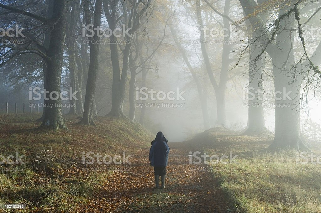 Young boy in misty woodland royalty-free stock photo