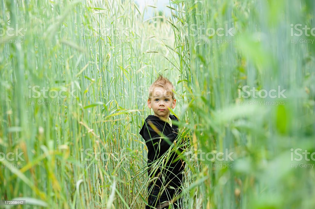 Young boy in wheat field royalty-free stock photo