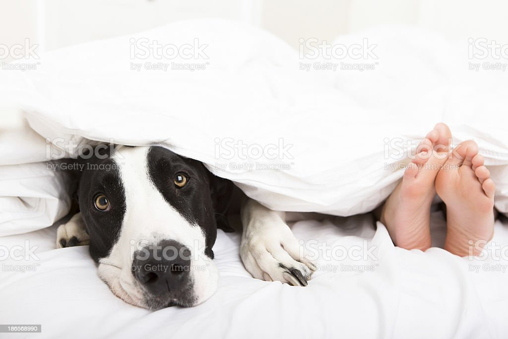 Young boy laying in bed with his dog stock photo