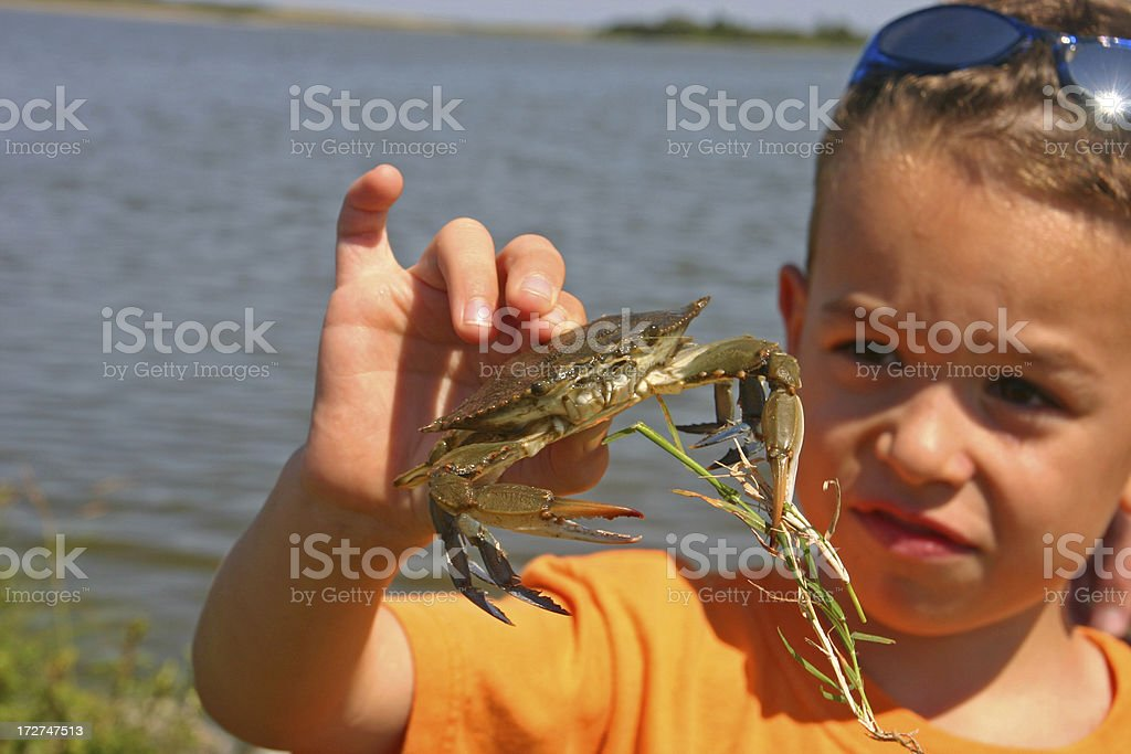Young boy looking at blue crab in his hand royalty-free stock photo