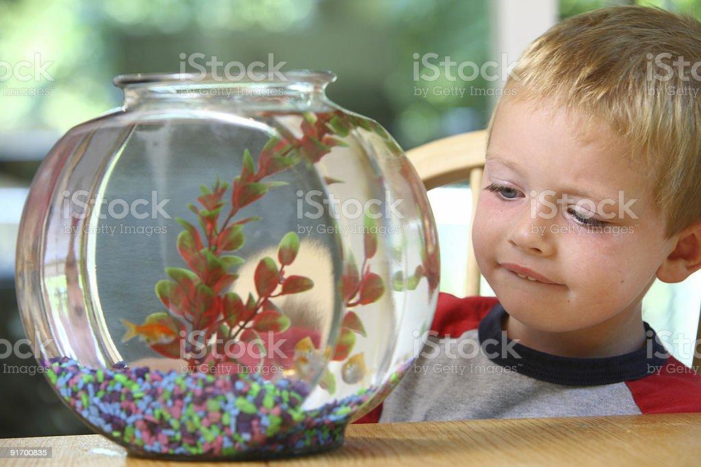 Young boy looking at fish bowl stock photo
