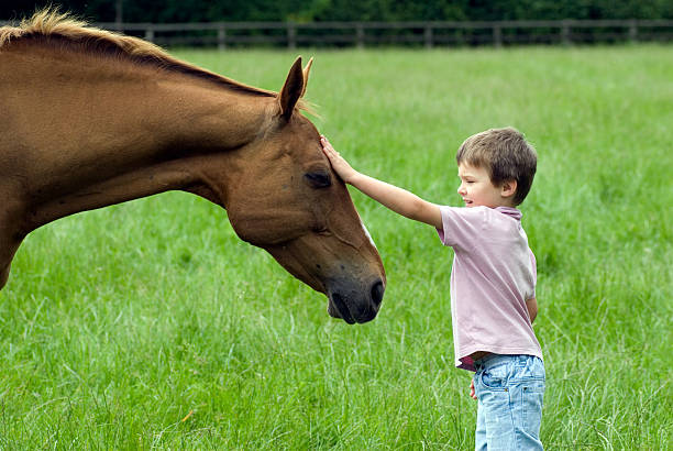 Young boy petting Gentle horse stock photo