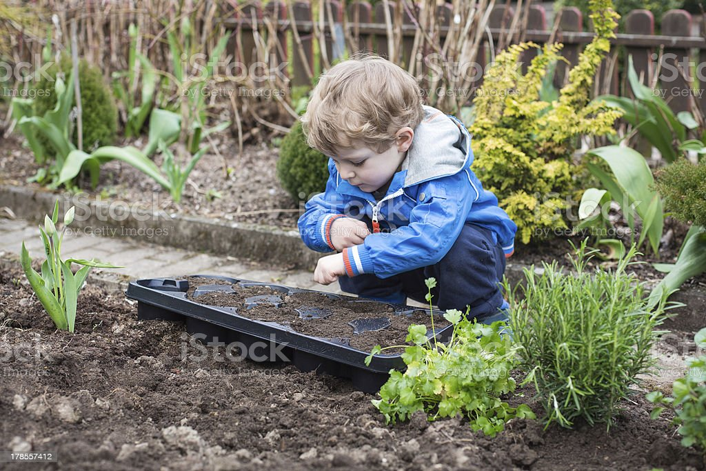 Young boy planting seeds in the vegetable garden stock photo