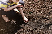 Young boy planting vegetable seeds in garden beds