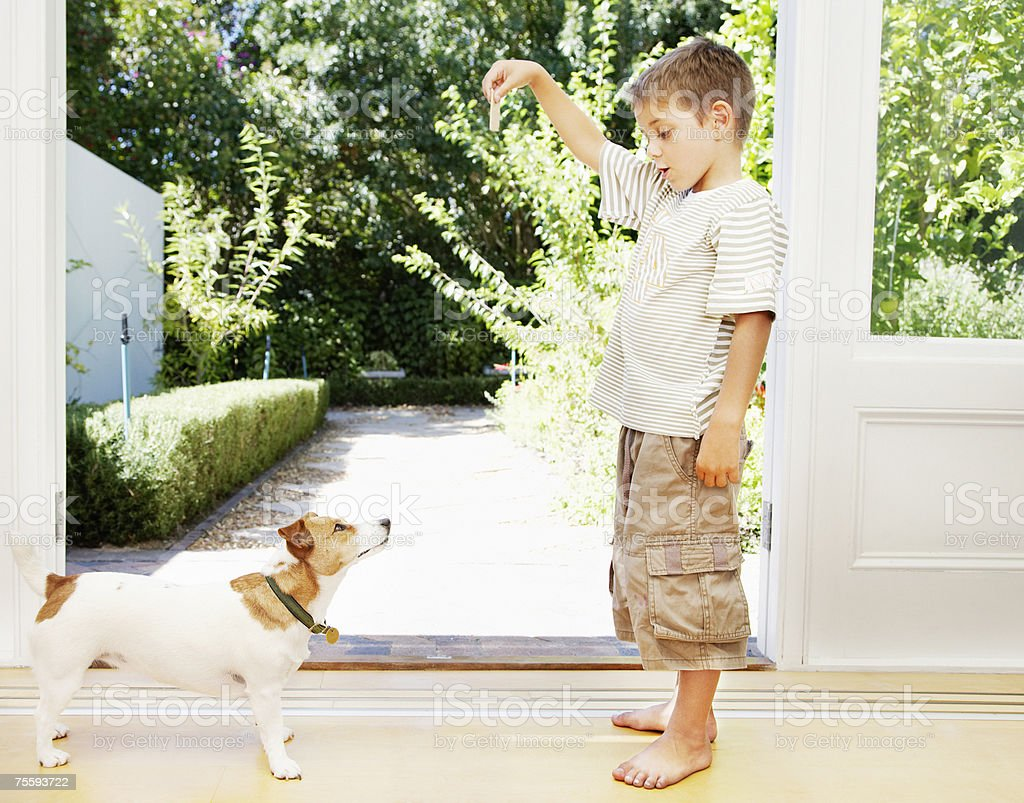 A young boy playing with his small dog royalty-free stock photo