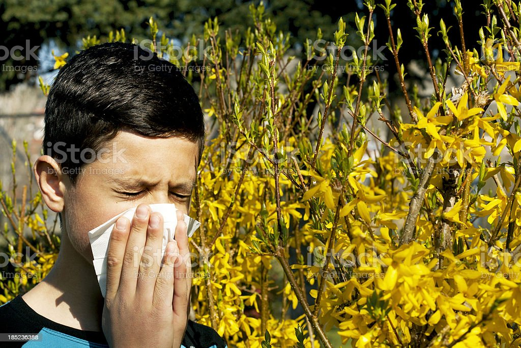 boy blowing his nose and suffering from hay fever.