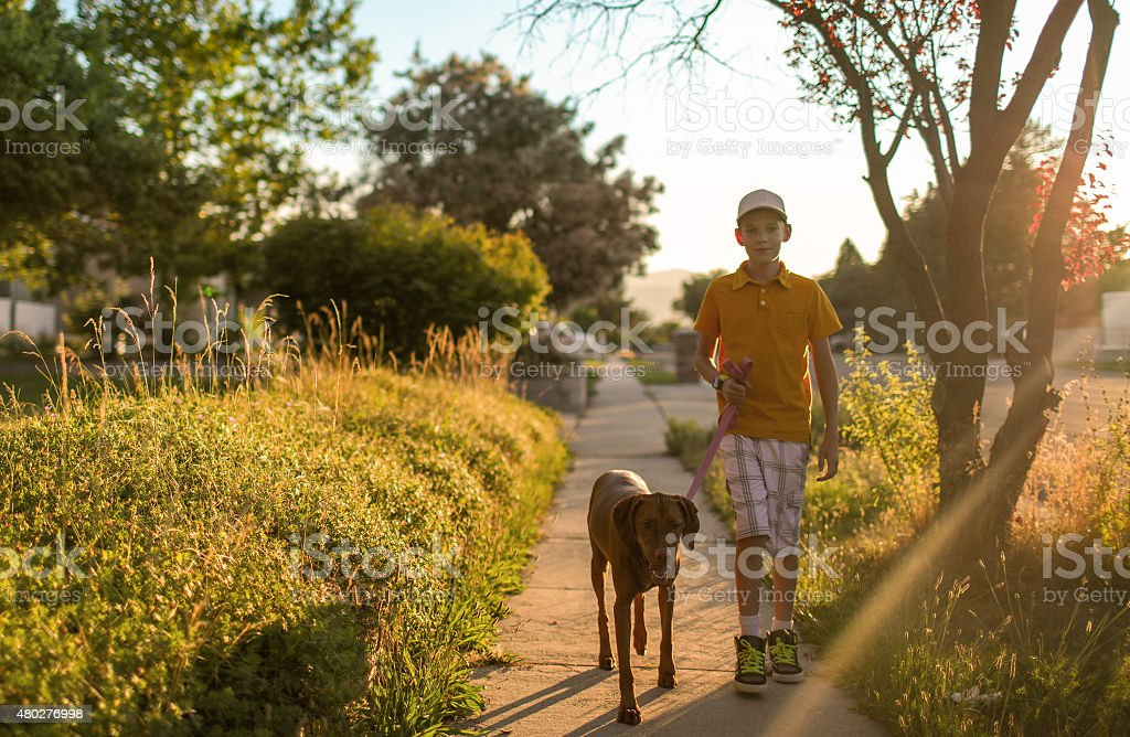 Young Boy Takes Dog For Walk stock photo