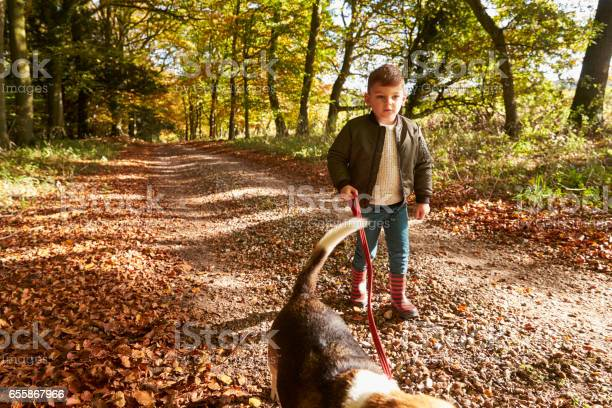Young boy walking dog in autumn woodland picture id655867966?b=1&k=6&m=655867966&s=612x612&h=bgfzymdfdrqnsc3 h18do 2sbyidqlcaqvhlkbg1xvo=
