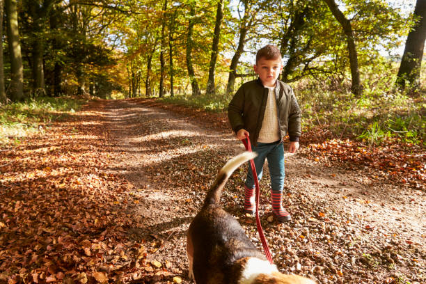 Young boy walking dog in autumn woodland picture id655867966?b=1&k=6&m=655867966&s=612x612&w=0&h=ysz9m oogzrb9anwsv7 14ycis x1li3 xgptj7ecfw=