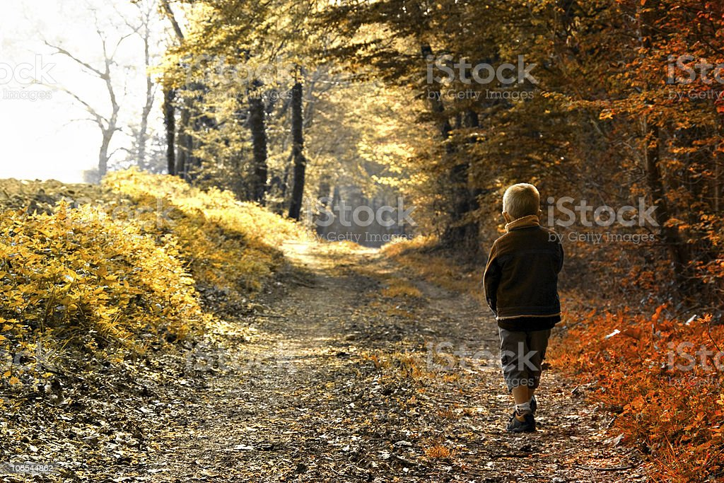 Young boy walking through autumn forest royalty-free stock photo
