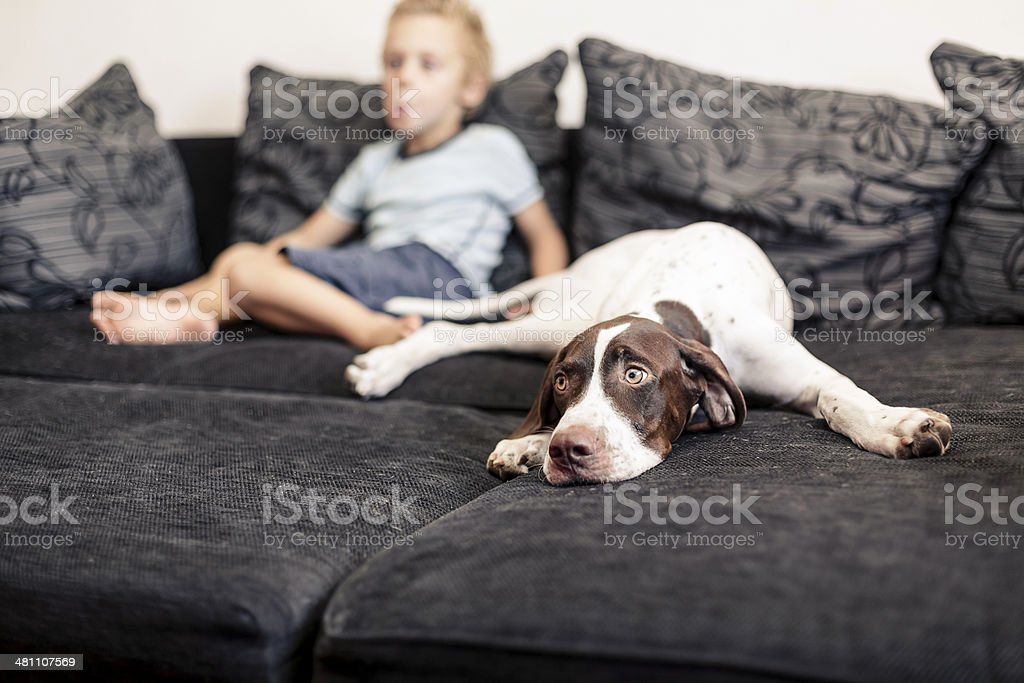 Young boy watching TV with his Dog royalty-free stock photo