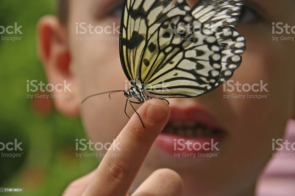 Young boy with butterfly on his hand stock photo