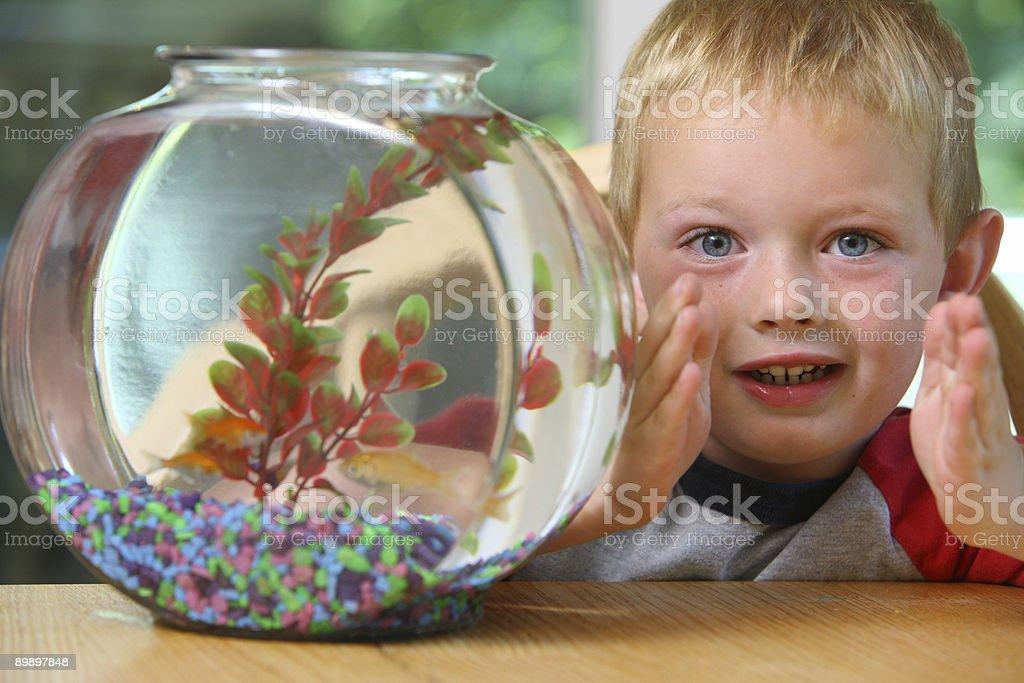 Молодой мальчик с fish-bowl Стоковые фото Стоковая фотография