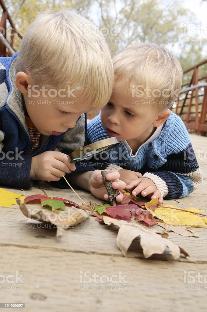 Young boys Inspecting leafs with magnifying glass royalty-free stock photo
