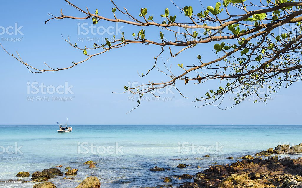 Young branches of tree on the beach royalty-free stock photo