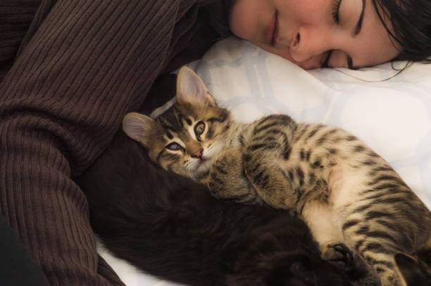 Young brunette woman resting with cute kittens on the bed. stock photo