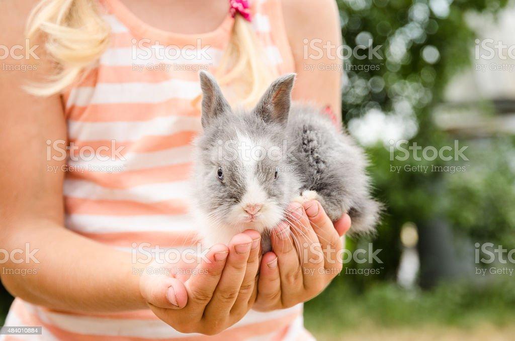 Junge bunny rabbit in den Händen – Foto