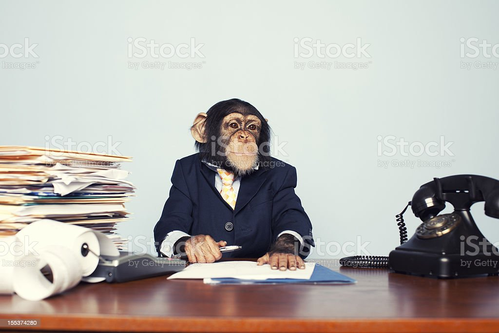 Young Business Ape stock photo
