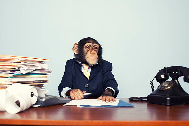 young business ape - ape stock pictures, royalty-free photos & images