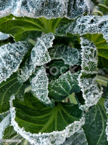 First frost. Plants are covered with frost. Close-up