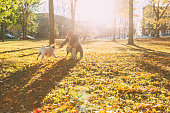 Beautiful young woman playing with her pug in a park by a beautiful autumn afternoon.