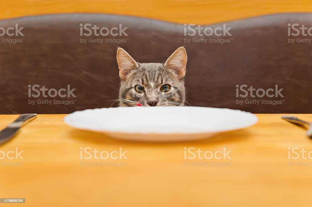 young cat after eating food from kitchen plate stock photo