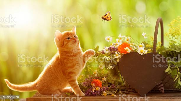 Young cat and butterfly with medicinal herbs picture id527223670?b=1&k=6&m=527223670&s=612x612&h= 1rct9k8sl8c6uyiynksz4o8wz7j8rtbl0jmc9sqjwc=