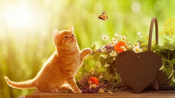 Young cat and butterfly with medicinal herbs picture id527223670?b=1&k=6&m=527223670&s=612x612&w=0&h=4onlbdgkwbdyudeblbs0gcju kfqbfenxxjs7kbvrim=