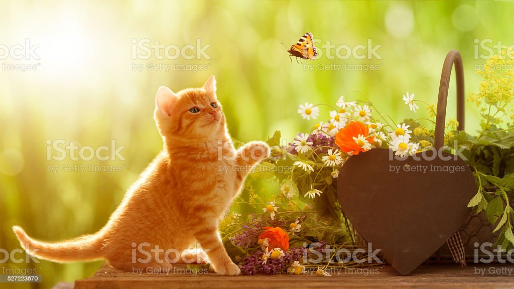 young cat and butterfly with medicinal herbs stock photo