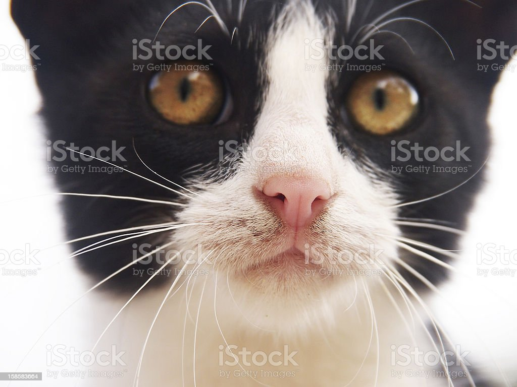 young cat, black and white,  close-up, front view stock photo