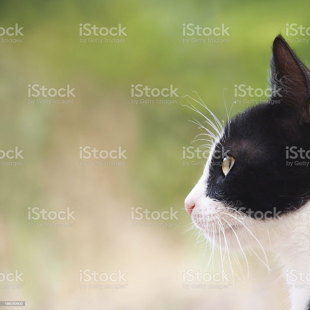 young cat, black and white close-up stock photo
