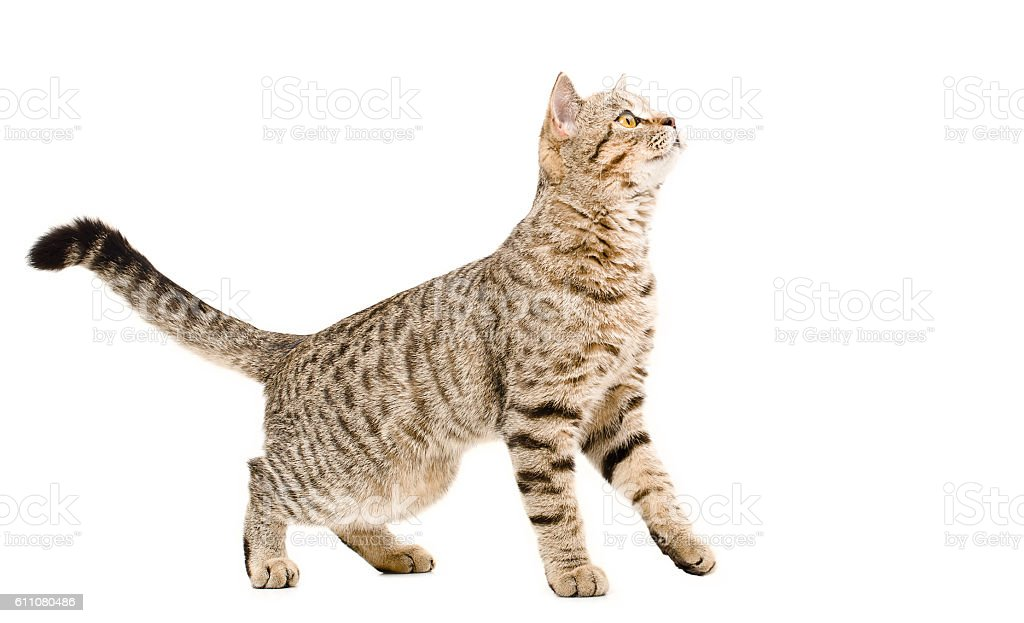 Young cat curious looking up stock photo