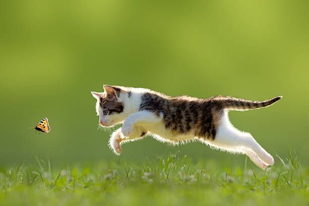 young cat hunting butterfly - kitten stock photos and pictures