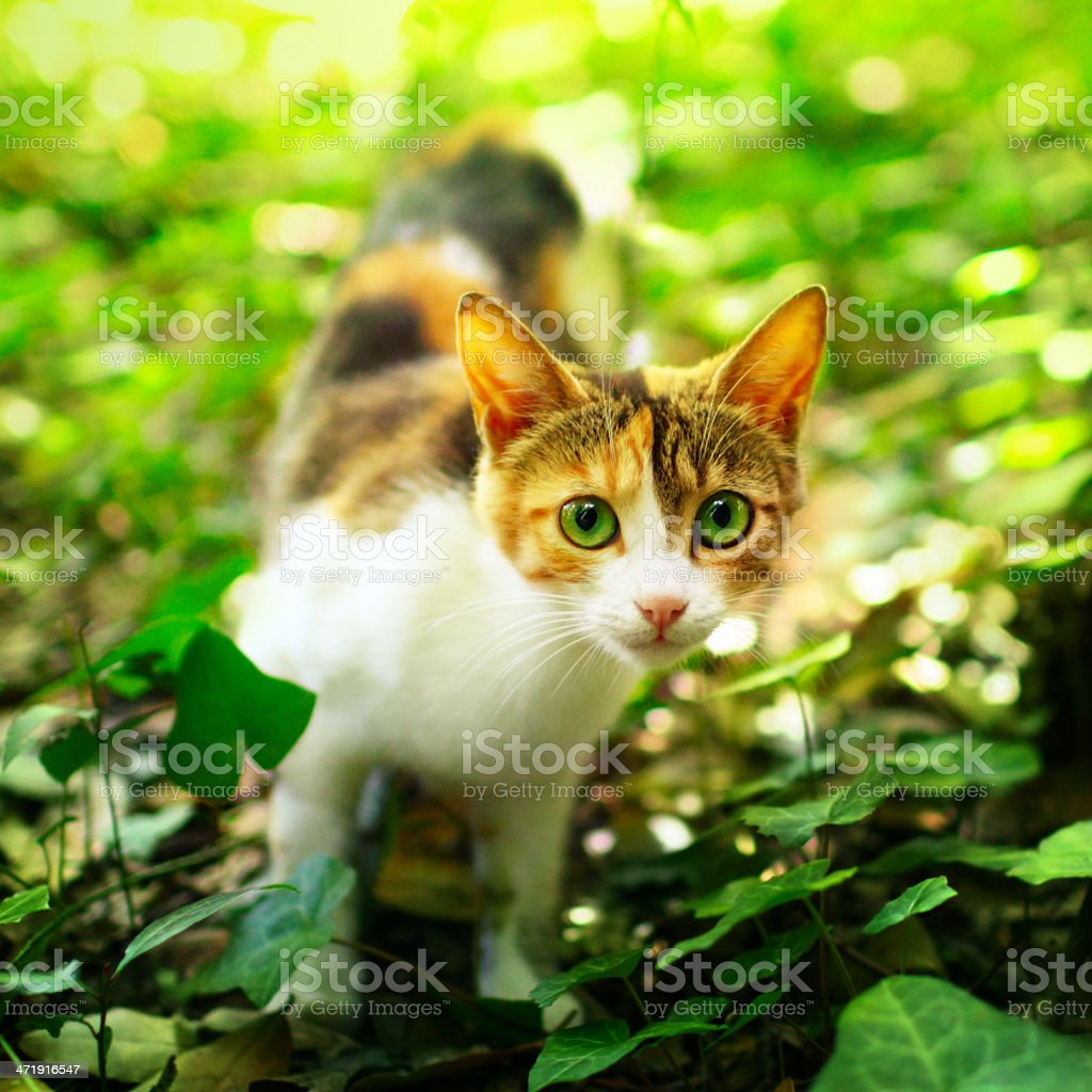 Young cat in the grass royalty-free stock photo