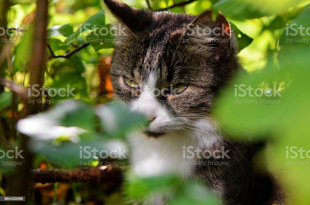 Gato joven en busca de presas - foto de stock