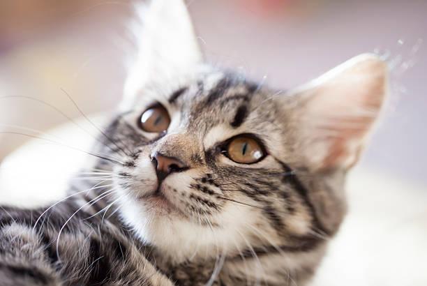 Young cat lounging on the sofa picture id505031668?b=1&k=6&m=505031668&s=612x612&w=0&h=eya7svq0mqjcds8ta9ovjdzynwzc12dgpt4ki alcui=