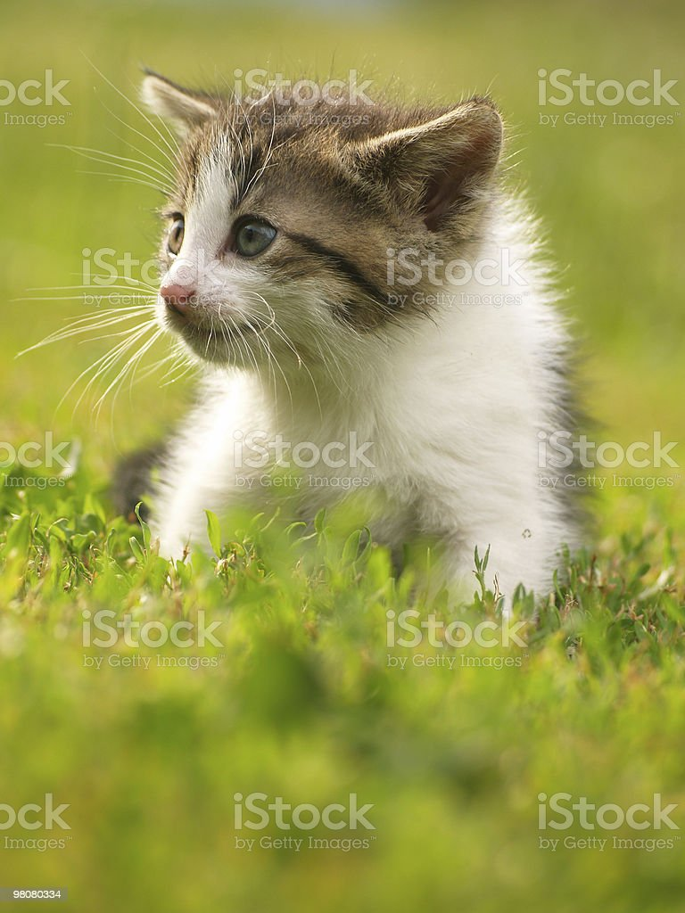 young cat on green royalty-free stock photo