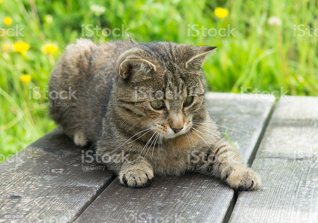 Young Cat on wooden bench in grass stock photo