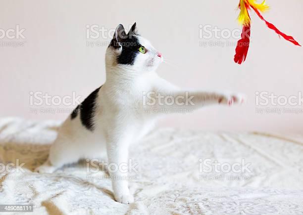 Young cat picture id489088111?b=1&k=6&m=489088111&s=612x612&h=jl3znq2knm9hvxwf5fhaxhjwoflauqay6lbyol9ohqa=