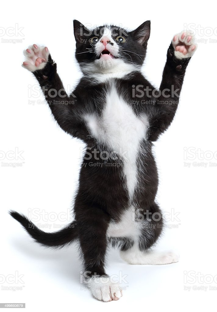 Young Cat stock photo