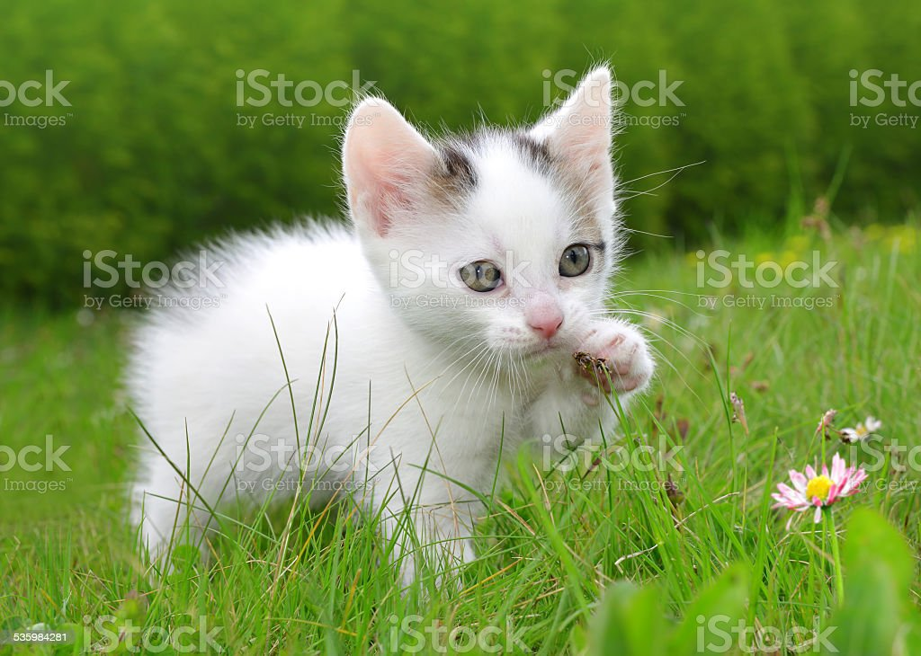 young cat - foto de stock