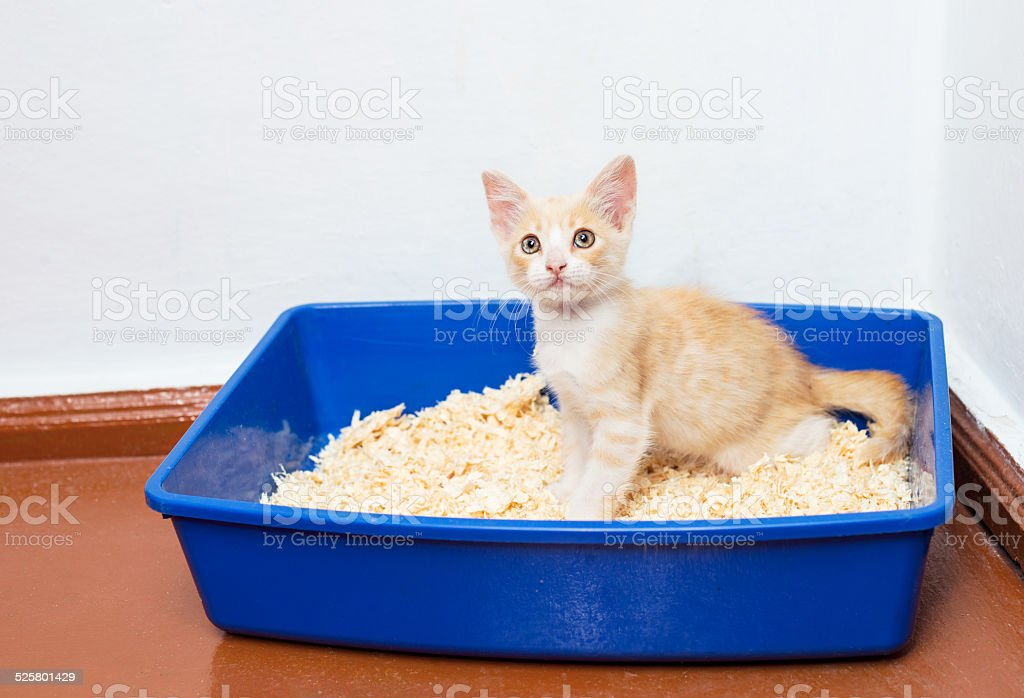 Young cat use the toilet - Royalty-free Animal Stock Photo
