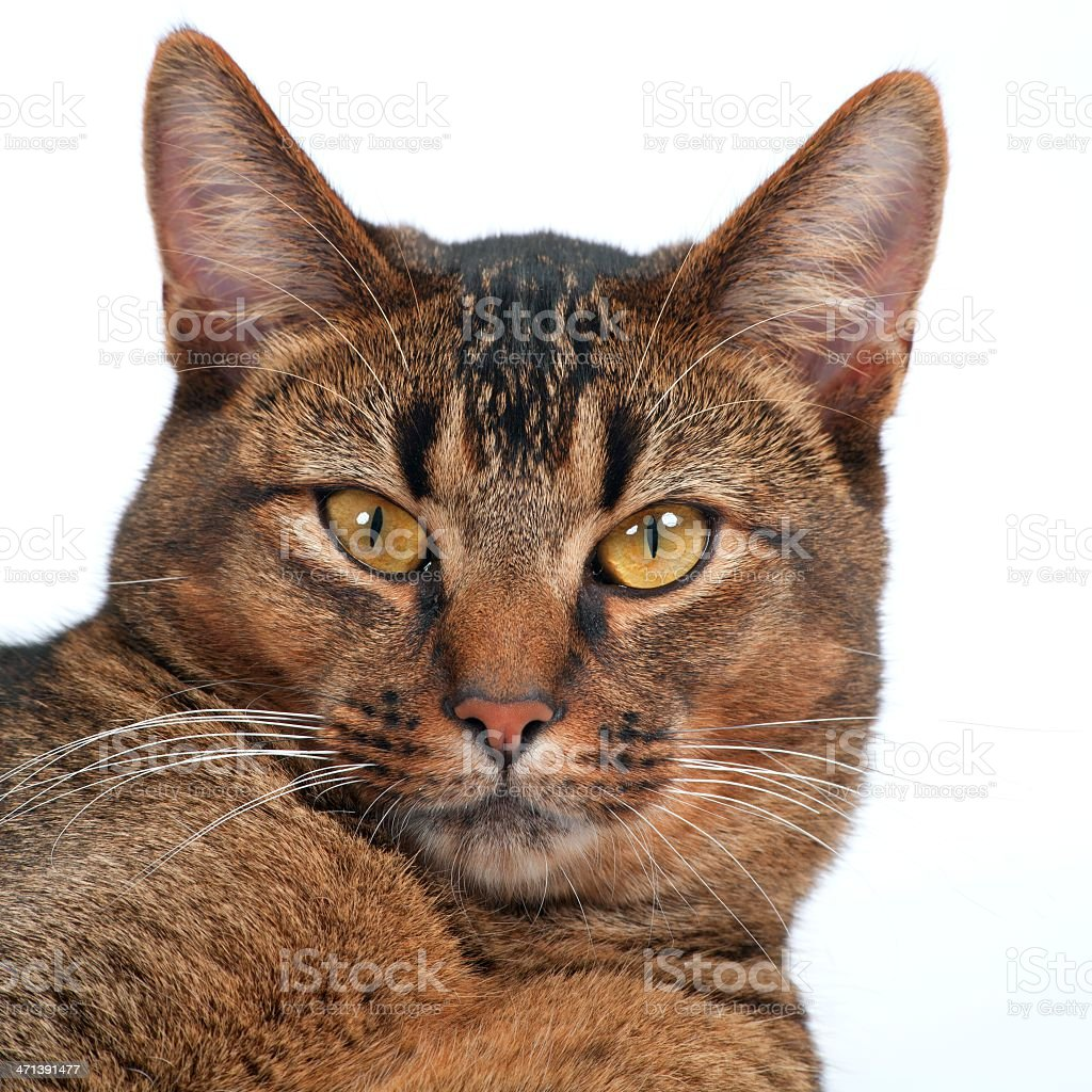 Young cat watching royalty-free stock photo