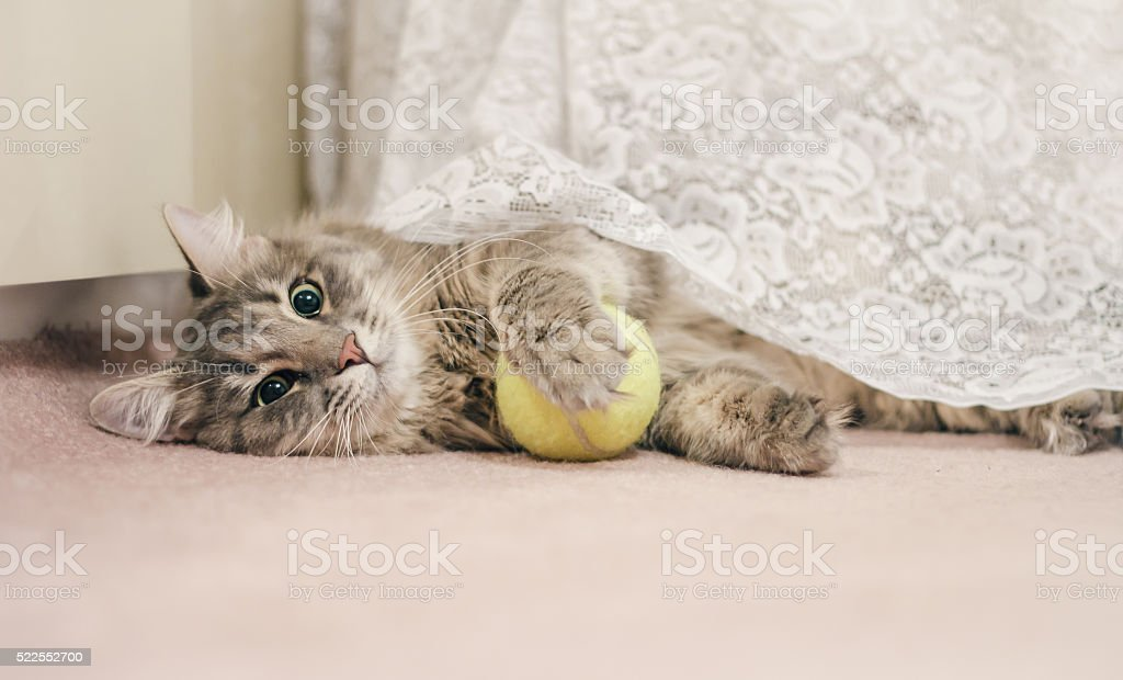Young cat with a tennis ball stock photo