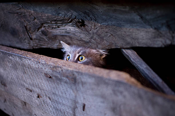 Young cat with frightened gaze hidden behind a fence A young cat with frightened gaze hidden behind a fence so that her had only can be seen, looking upward. scared cat stock pictures, royalty-free photos & images