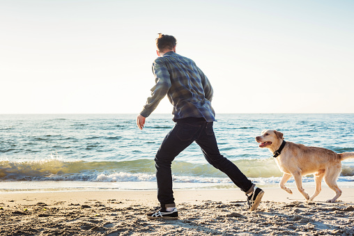 young caucasian male playing with labrador on beach