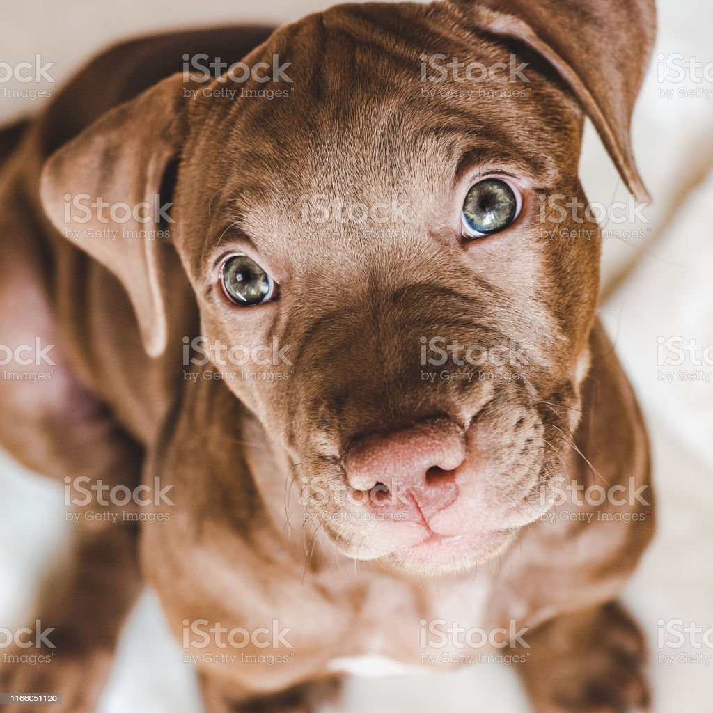 Young, charming puppy. Close-up, view from above, white background....