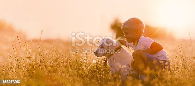 istock Young Child Boy Training Golden Retriever Puppy Dog in Meadow on Sunny Day 867567260