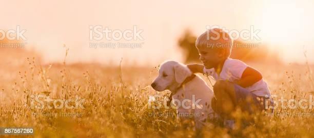 Young child boy training golden retriever puppy dog in meadow on day picture id867567260?b=1&k=6&m=867567260&s=612x612&h=gjwigerhoir3bizt1k01hi pk ysiltnwetgtn5cviw=
